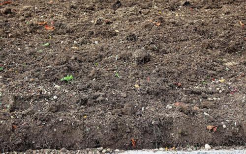 O húmus é fundamental para a preservação e fertilidade do solo