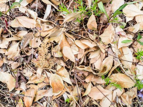 A cobertura do solo é importante para a preservações deste recurso